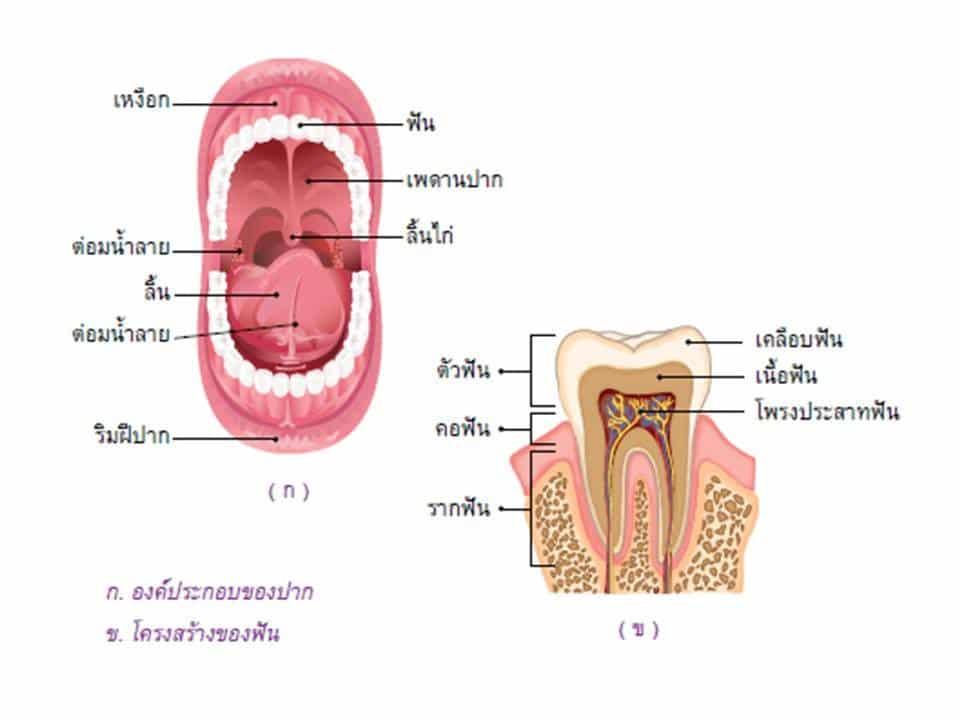 ช่องปาก