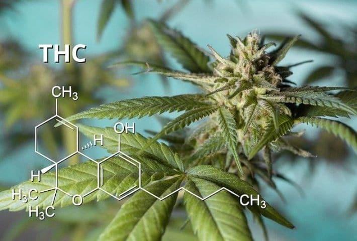 สาร THC